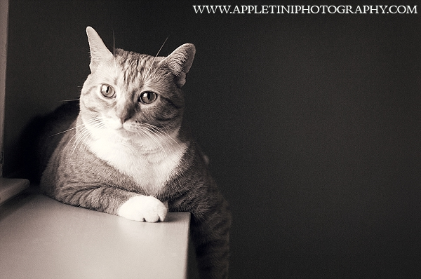 AppletiniPhotography_799