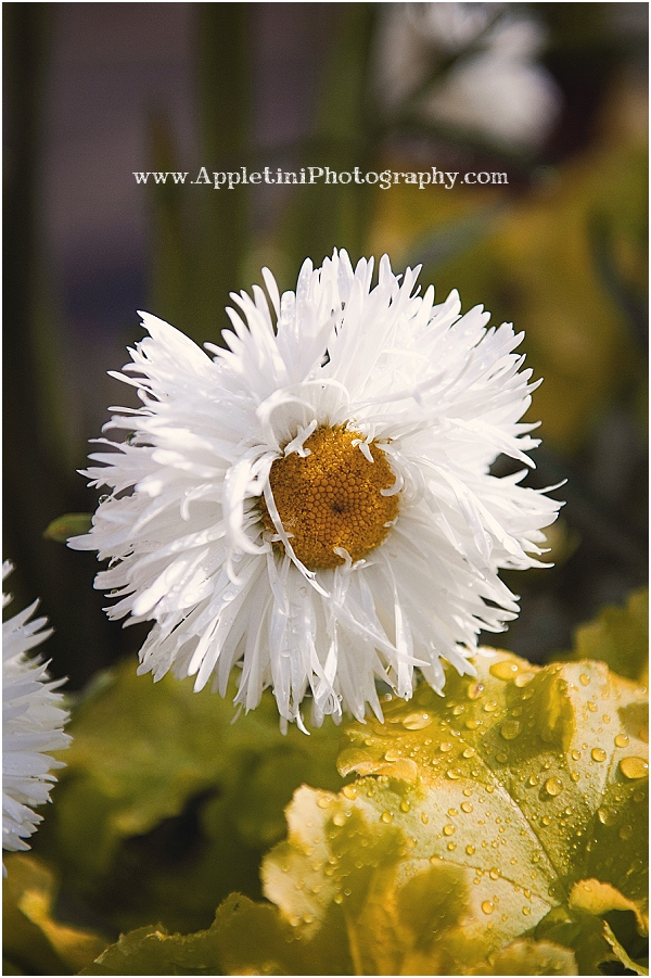 AppletiniPhotography_2469