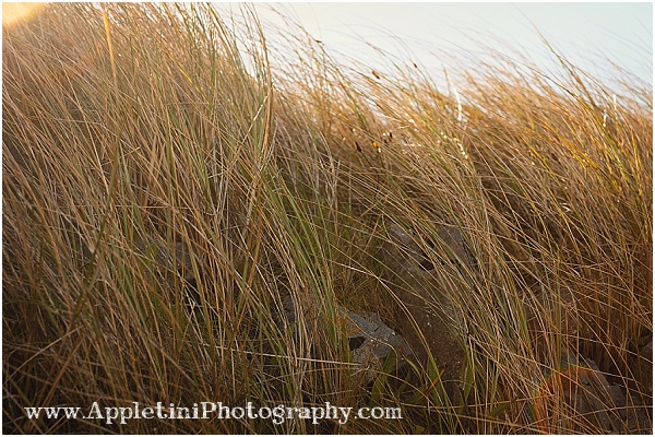 AppletiniPhotography_2538
