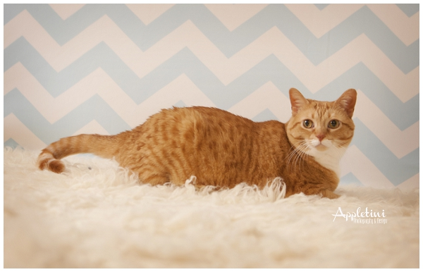 AppletiniPhotography_0616